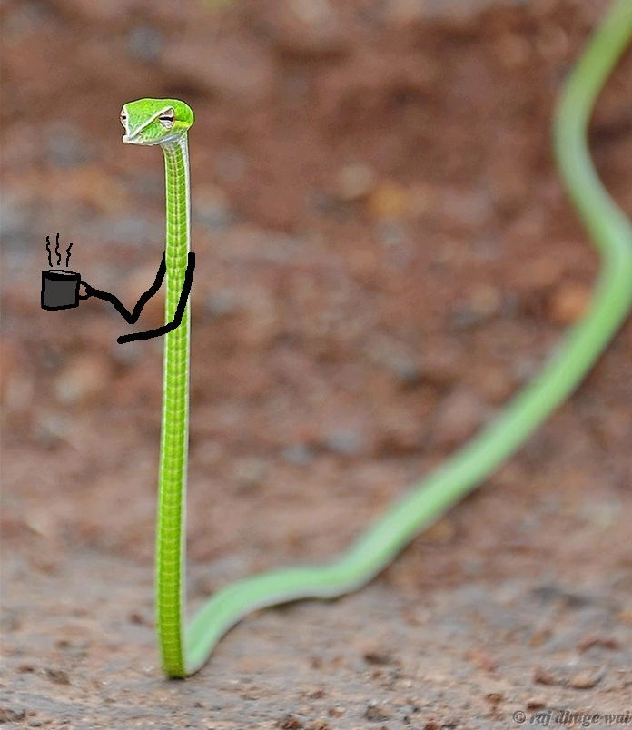 Plant stem - raj dhge wai