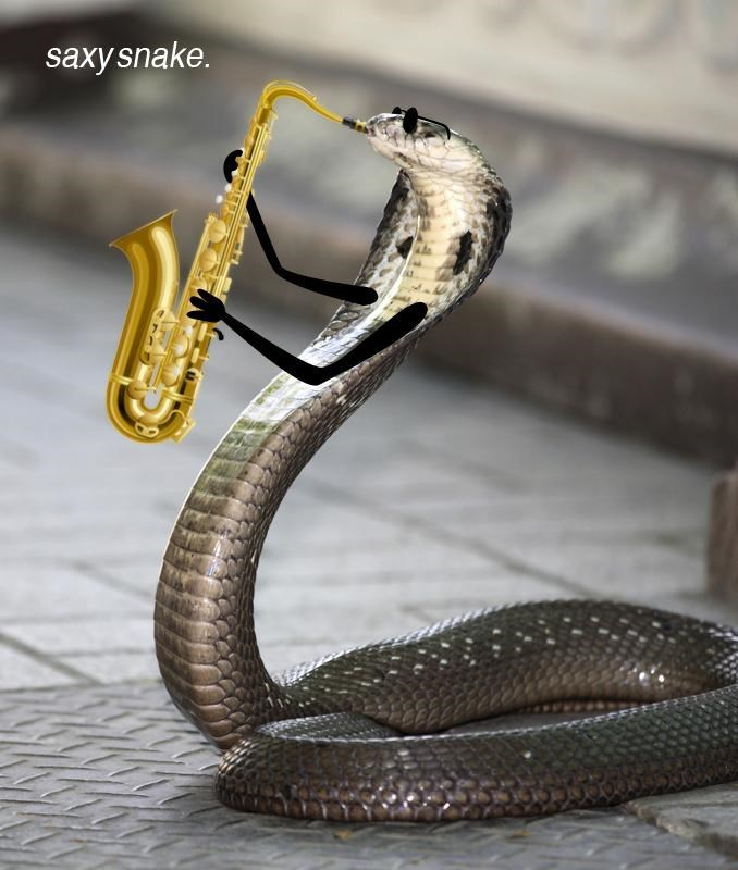 Snake - saxy snake.