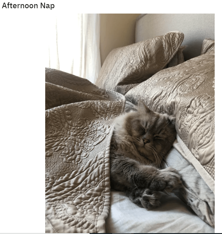 Cat - Afternoon Nap