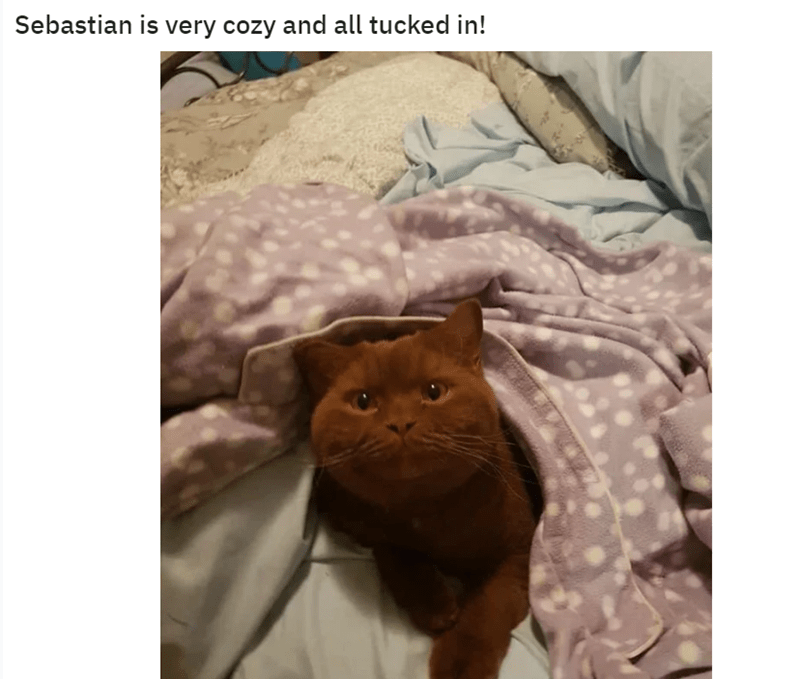 Cat - Sebastian is very cozy and all tucked in!