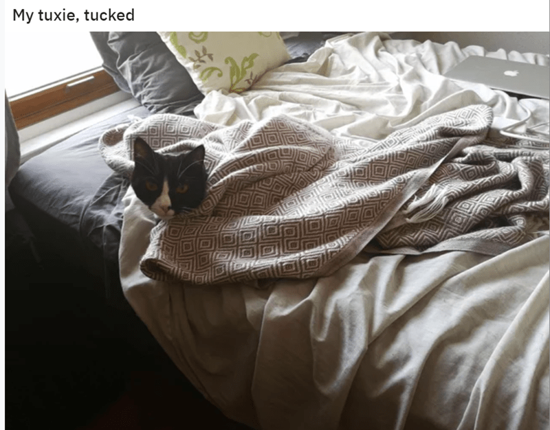 Bed sheet - My tuxie, tucked