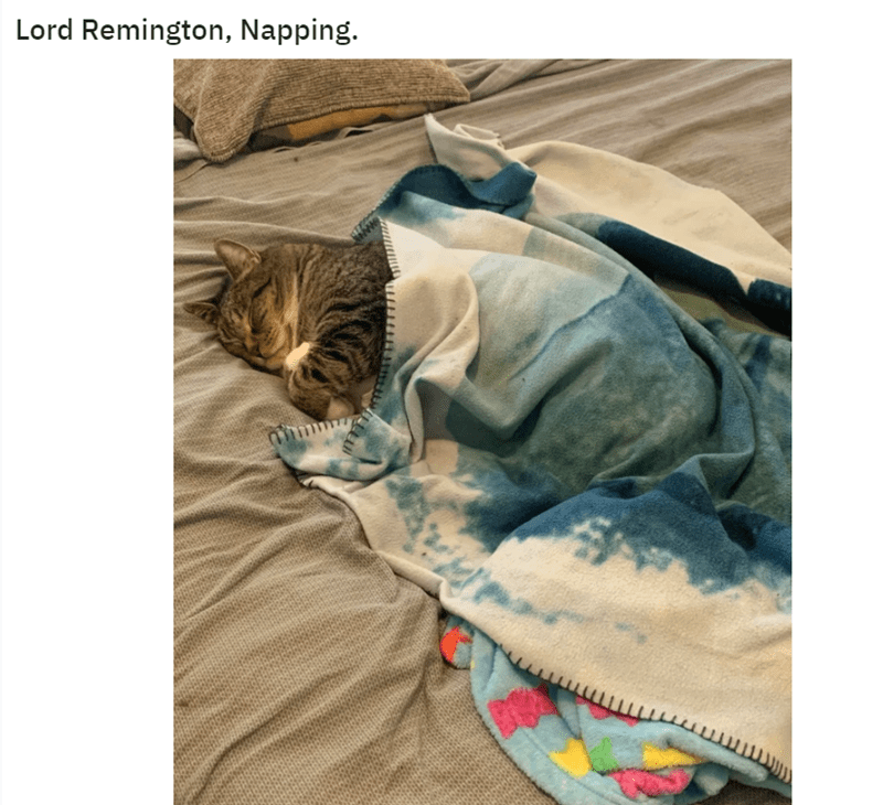 Cat - Lord Remington, Napping.