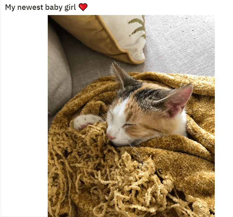 Cat - My newest baby girl