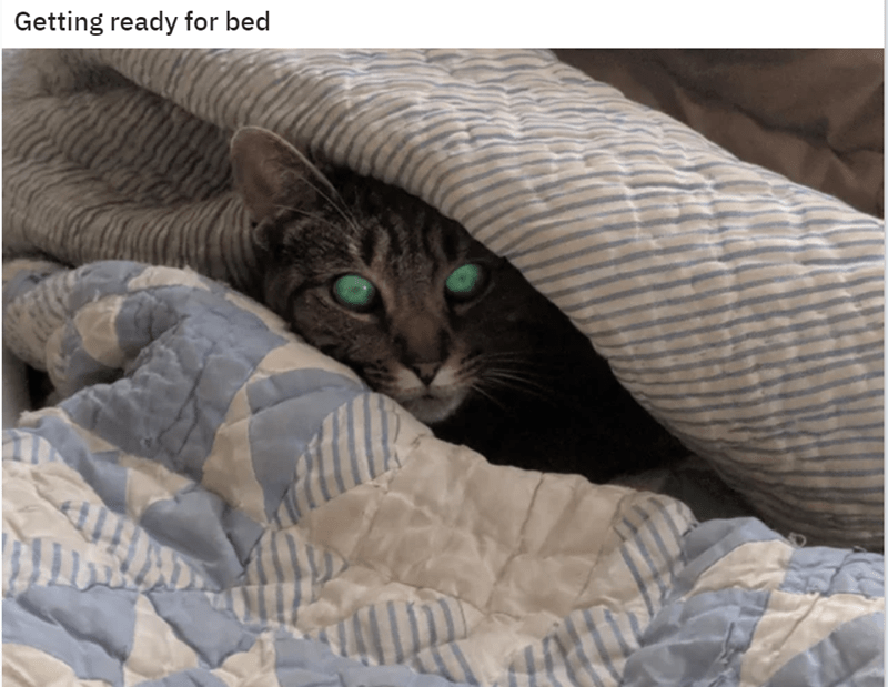 Cat - Getting ready for bed