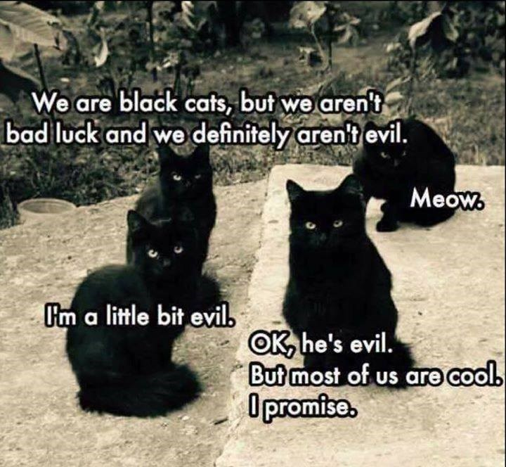 cat memes - 9356957696