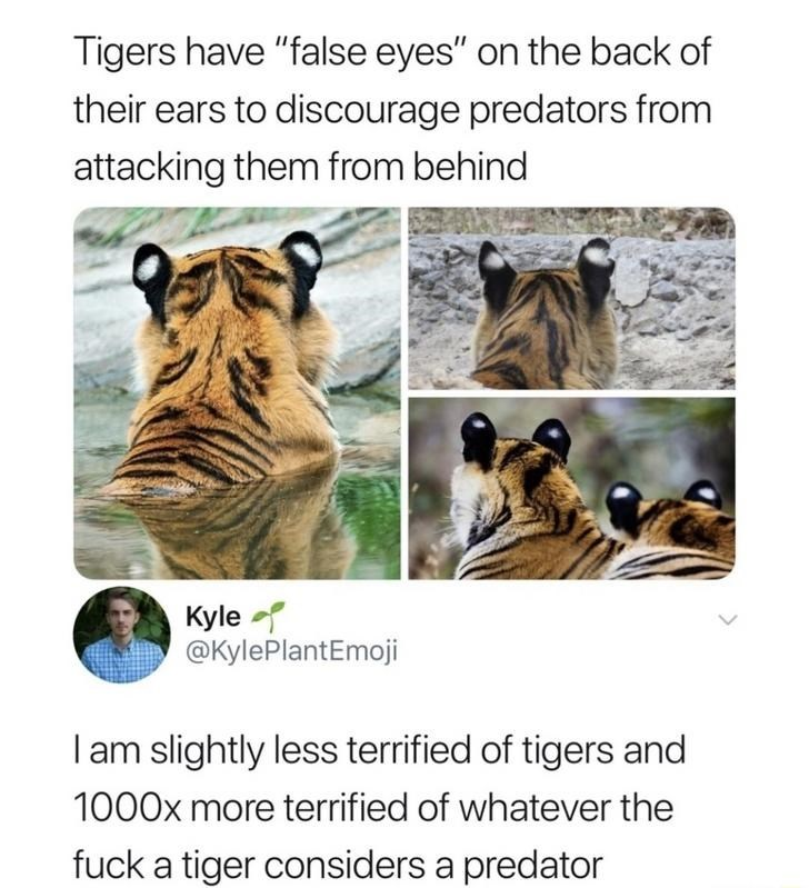 facts tigers tweets funny - 9356992256