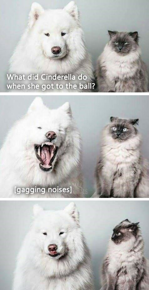 cat dogs jokes funny - 9356995584
