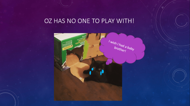 Text - OZ HAS NO ONE TO PLAY WITH! I wish I had a baby brother!