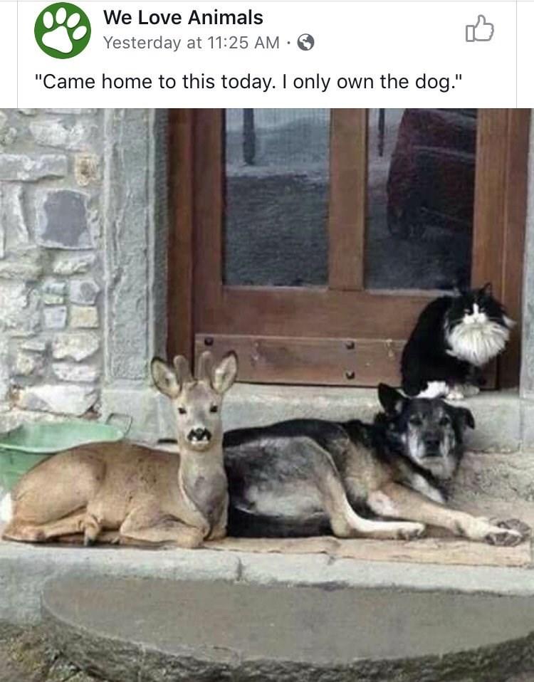 animal memes - 9357079296