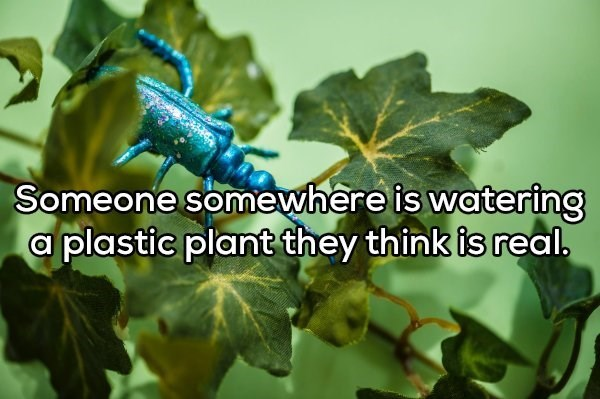 Leaf - Someone somewhere is watering a plastic plant they think is real.