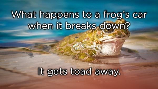 Organism - What happens to a frog's car when it breaks down? It gets toad away.