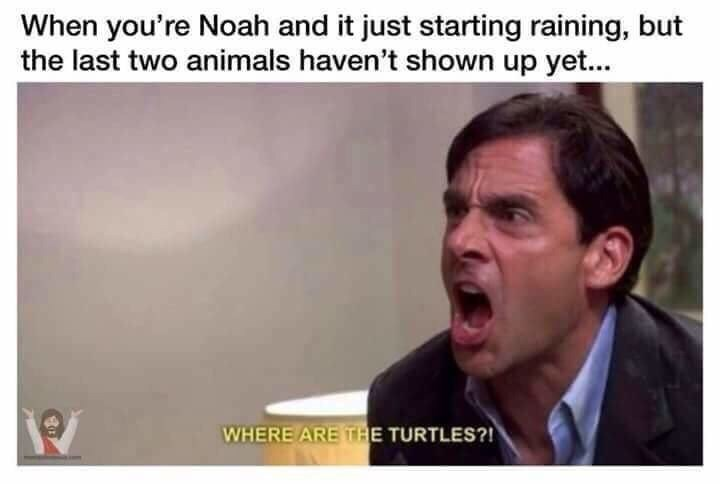 Text - Text - When you're Noah and it just starting raining, but the last two animals haven't shown up yet... WHERE ARE THE TURTLES?!