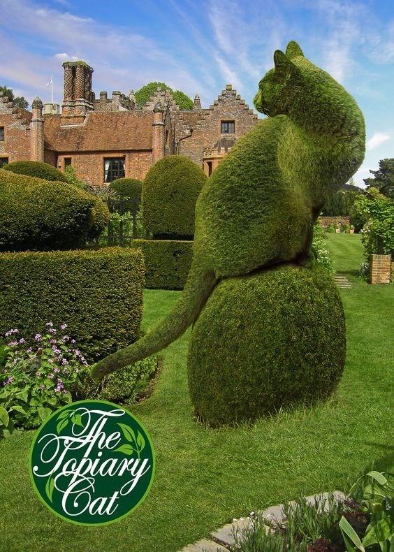 Hedge - Cat