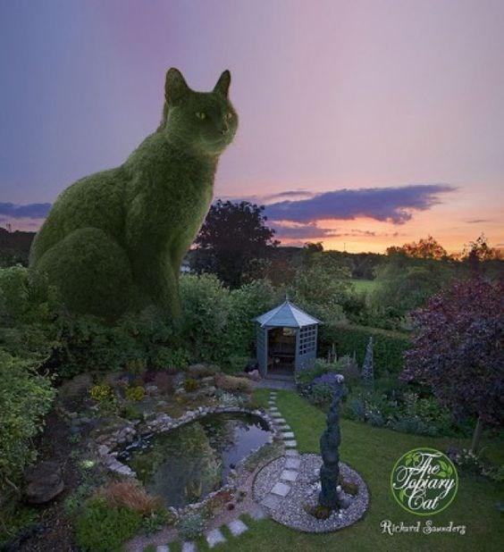 Cat - Tahary Cat Richard Saunders