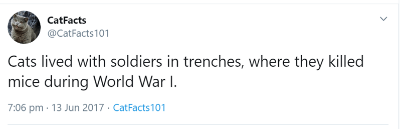Text - CatFacts @CatFacts101 Cats lived with soldiers in trenches, where they killed mice during World War I 7:06 pm 13 Jun 2017 - Cat Facts101