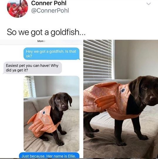 Dog breed - Conner Pohl @ConnerPohl So we got a goldfish... Mom Hey we got a goldfish. Is that ok? Easiest pet you can have! Why did ya get it? Just because. Her name is Ellie.