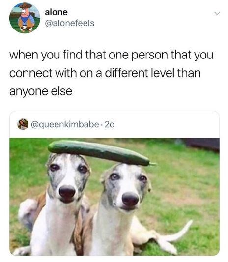 Mammal - alone @alonefeels when you find that one person that you connect with on a different level than anyone else @queenkimbabe 2d