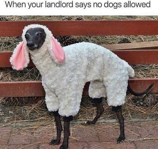 Vertebrate - When your landlord says no dogs allowed