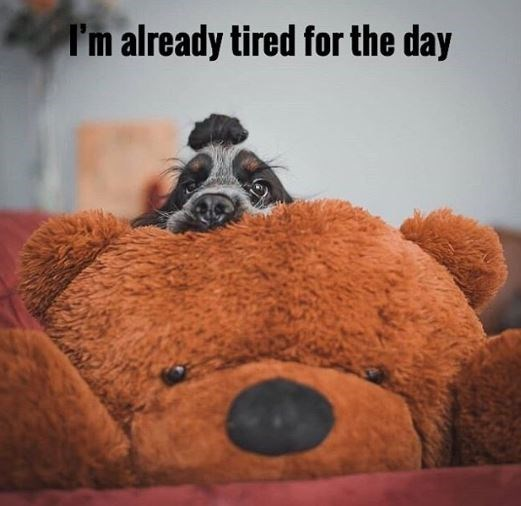Teddy bear - I'm already tired for the day