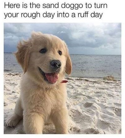 Dog - Here is the sand doggo to turn your rough day into a ruff day