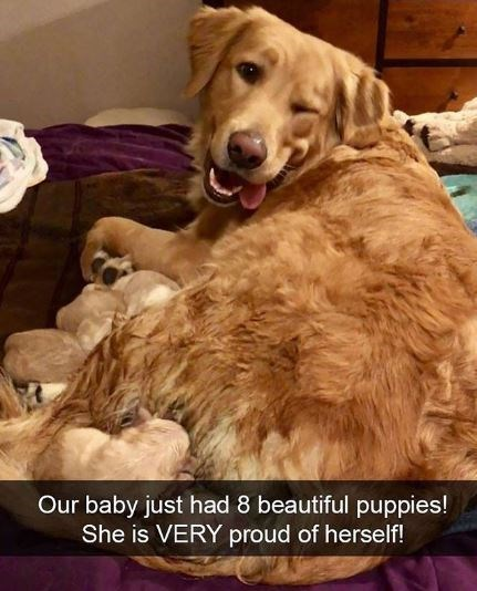 Dog breed - Our baby just had 8 beautiful puppies! She is VERY proud of herself!