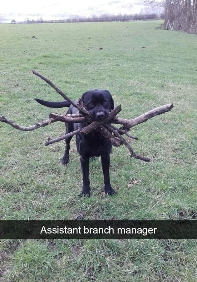 Organism - Assistant branch manager