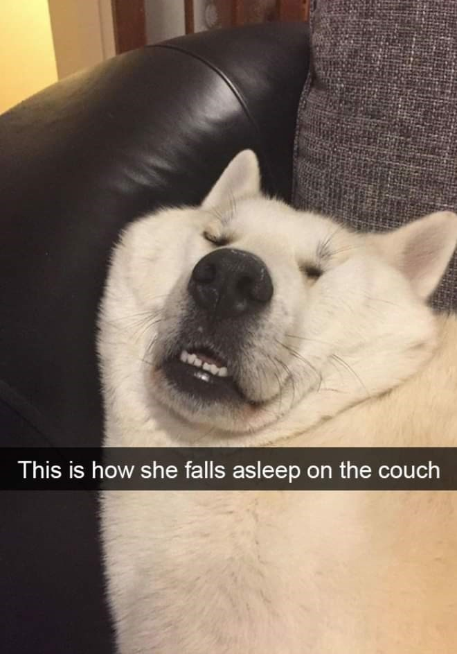 Mammal - This is how she falls asleep on the couch