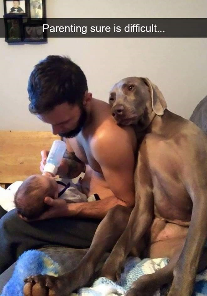 Dog - Parenting sure is difficul...