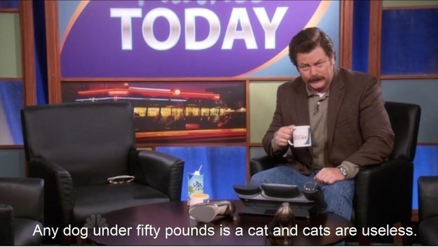 News - TODAY Any dog under fifty pounds is a cat and cats are useless.