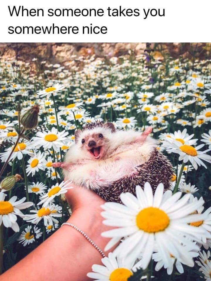 relationship meme - Daisy - When someone takes you somewhere nice