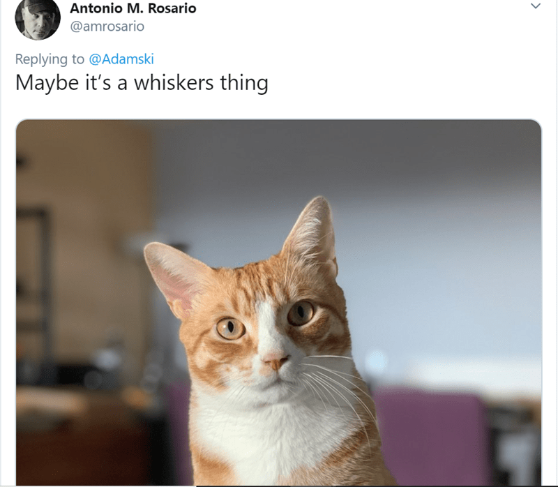 Cat - Antonio M. Rosario @amrosario Replying to @Adamski Maybe it's a whiskers thing