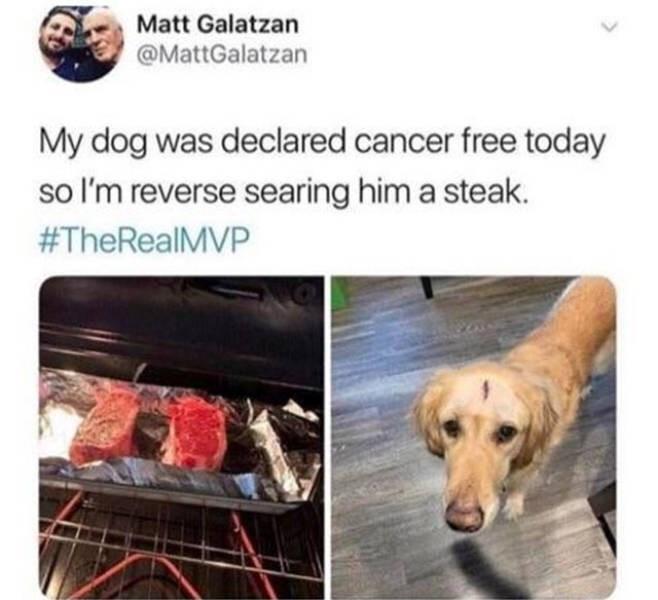 Dog breed - Matt Galatzan @MattGalatzan My dog was declared cancer free today so I'm reverse searing him a steak. #TheRealMVP