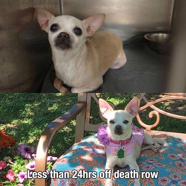 Dog - Less than 24hrs off death row