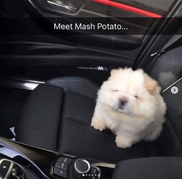 Mammal - Meet Mash Potato... aavotM