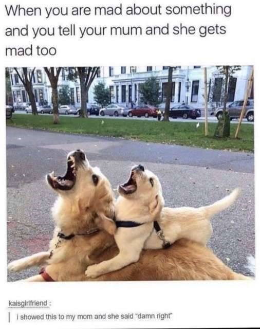 """Dog breed - When you are mad about something and you tell your mum and she gets mad too kaisgirifriend ishowed this to my mom and she said """"damn right"""""""