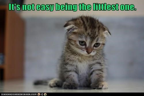 Cat - It's not easy being the littlest one. ICANHASCHEE2EURGER coM