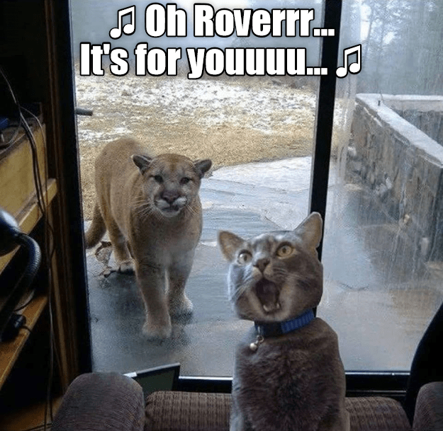Mammal - Oh Roverr.. It's for youuuu..