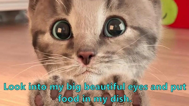 Cat - Look into my big beautiful eyes and put food in my dish