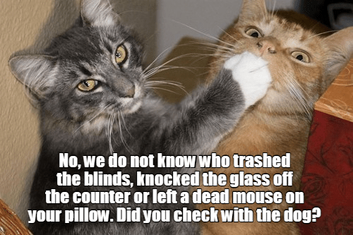 Cat - No, we do not know who trashed the blinds, knocked the glass off the counter or left a dead mouse on your pillow. Did you check with the dog?