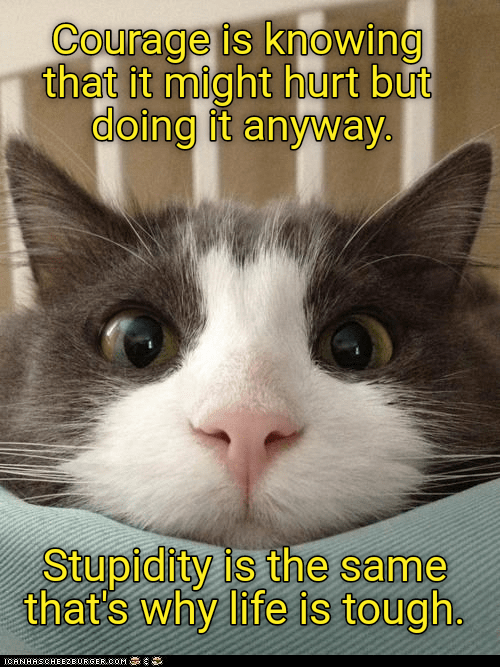 Cat - Courage is knowing that it might hurt but doing it anyway Stupidity is the same that's why life is tough