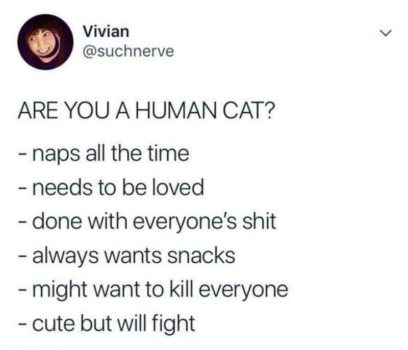 Text - Vivian @suchnerve ARE YOU A HUMAN CAT? -naps all the time - needs to be loved -done with everyone's shit - always wants snacks -might want to kill everyone - cute but will fight
