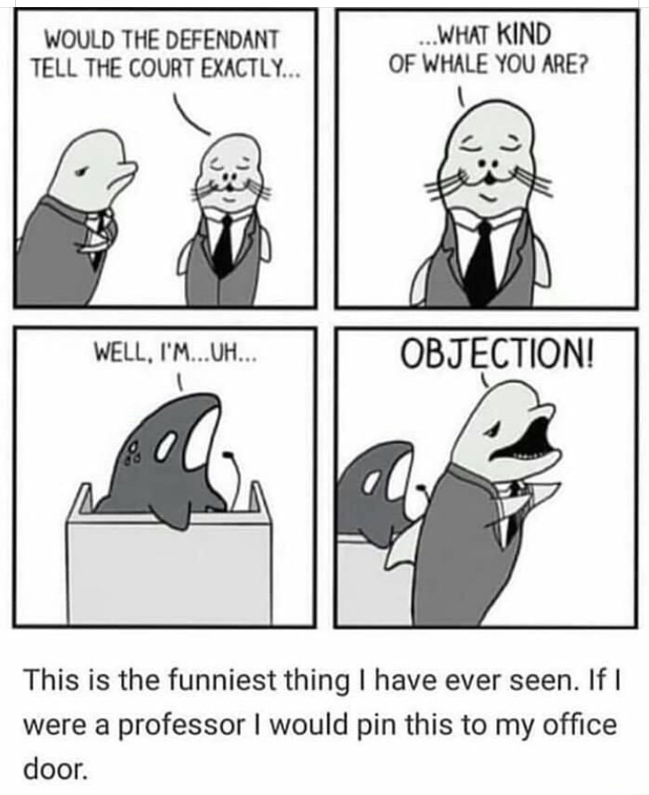 Facial expression - .WHAT KIND OF WHALE YOU ARE? WOULD THE DEFENDANT TELL THE COURT EXACTLY... OBJECTION! WELL,I'...UH... This is the funniest thing I have ever seen. If were a professor I would pin this to my office door.