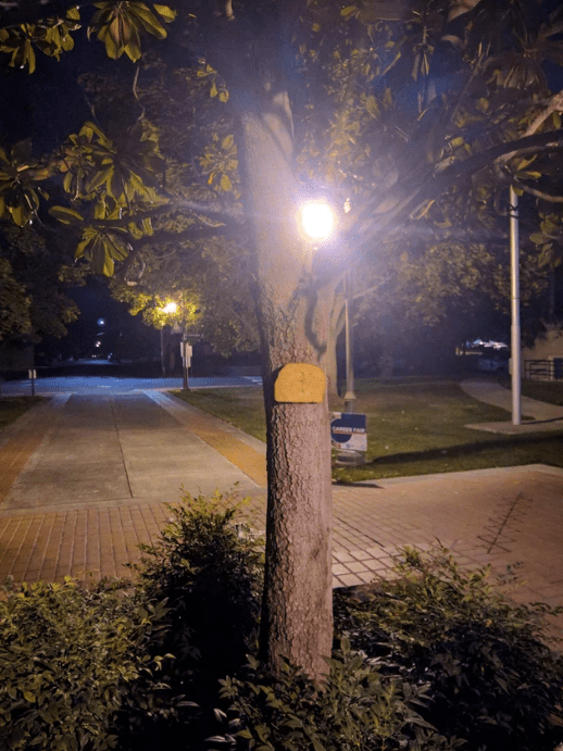 reddit - Street light - CARER