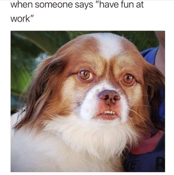 "Funny meme that reads, ""When someone says, 'have fun at work'"" above a photo of a dog looking displeased"