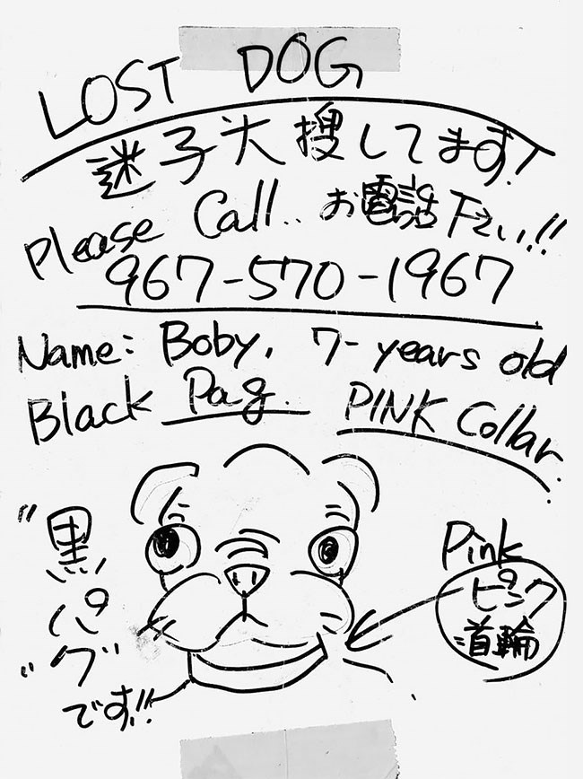 Text - LOST DOG plaage Cal 467-570-(967 Name Boby, 7- years ot Black Pag PINK Collar Pnk a