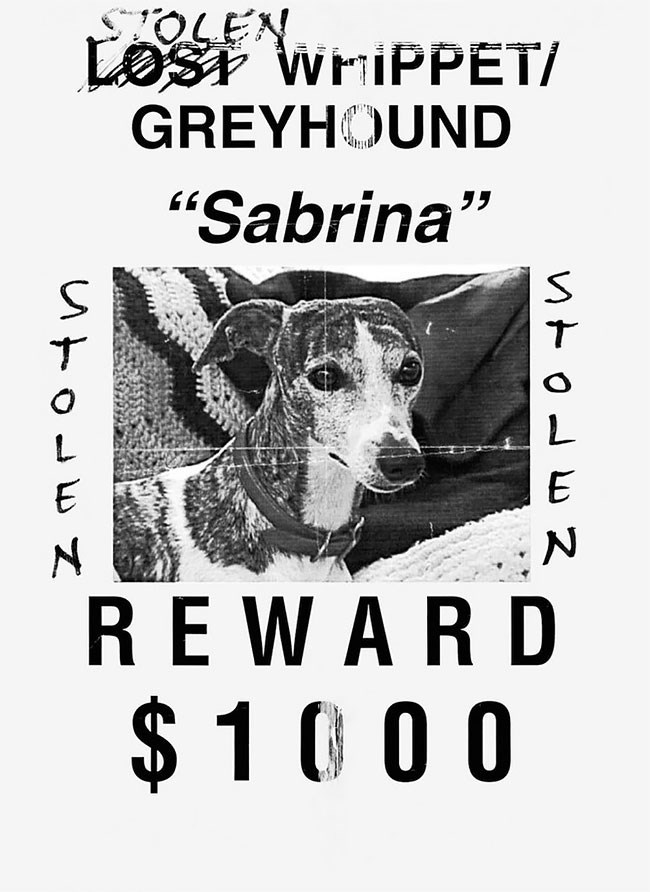 "Canidae - OLE LOSr WHIPPET/ GREYHOUND ""Sabrina"" T E REWARD $1 0 0 0"