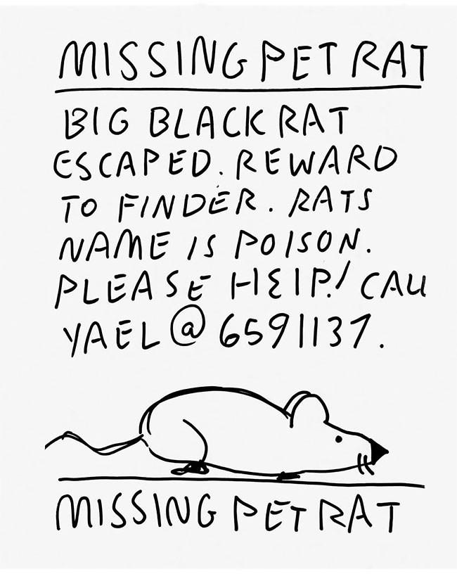 Text - MISSING PETRAT BIG BLACK RAT CS CAPED. REWARD TO FINDER. RATS NAME IS PO ISON PLEASE HEIP/ CAu YAEL@6591137. MISSING PET RAT