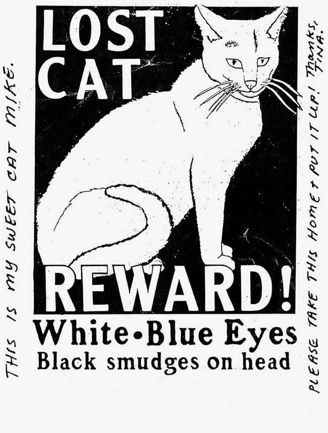 Felidae - LOST CAT REWARD! White Blue Eyes Black smudges on head THIS IS my SwEET CAT MIKE. PLEASE TAKE THIS HomEr PUT T UP Thamks N