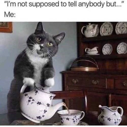 """Cat - """"I'm not supposed to tell anybody but..."""" Me:"""
