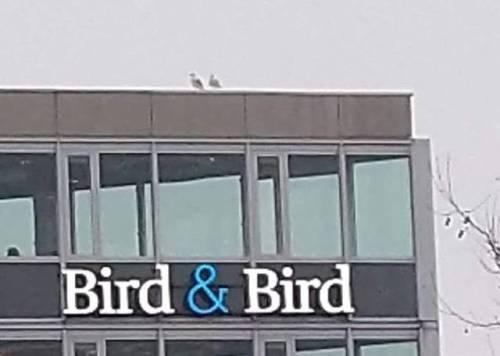 Transport - Bird & Bird